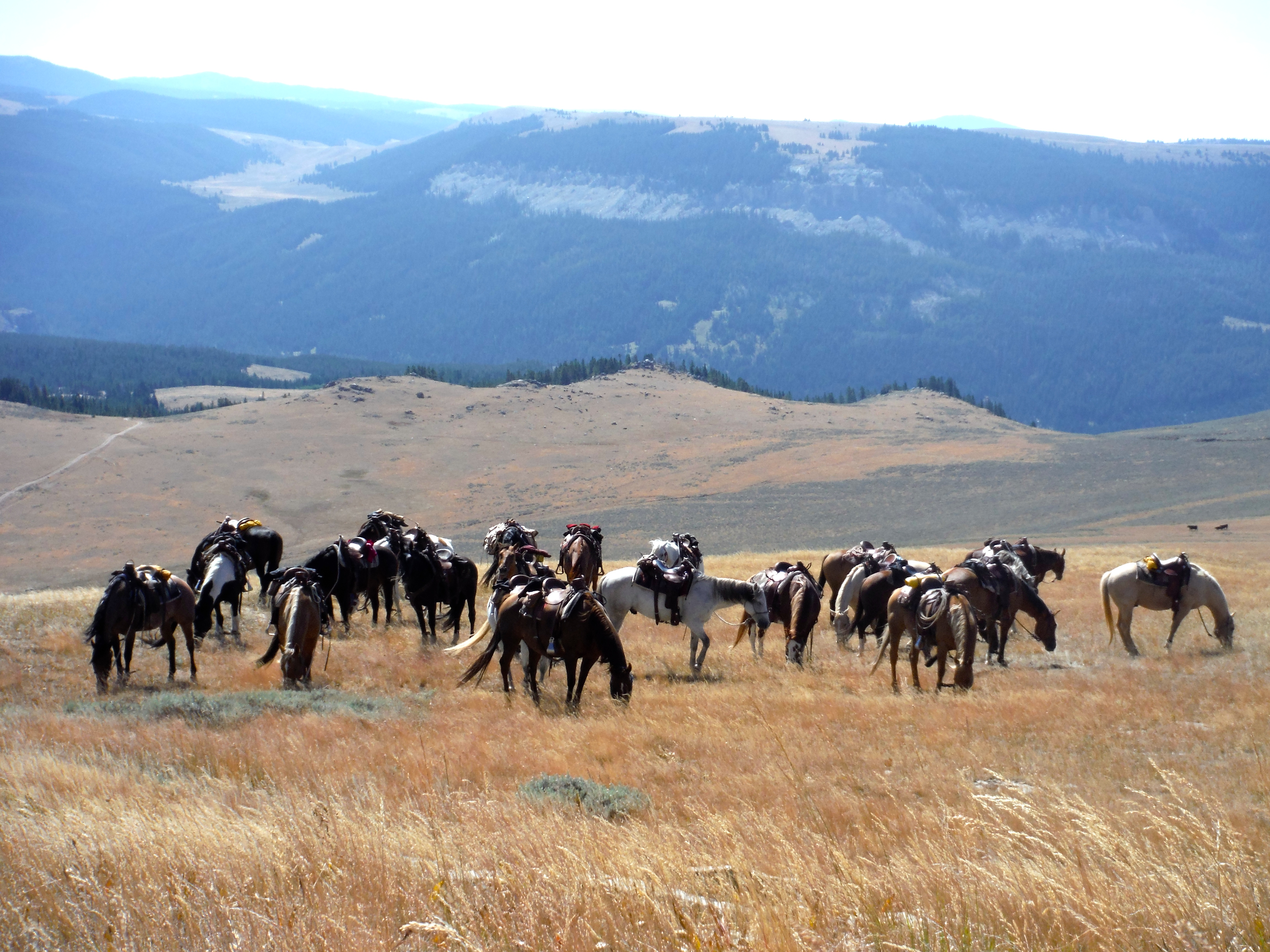 Wyoming Guest Ranch - Equestrian Resorts - Western Dude