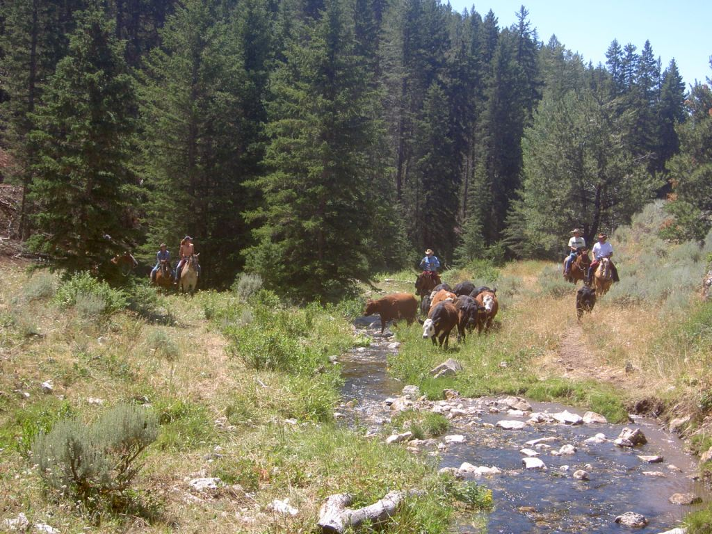 6f5e946fcea_copy-of-cattle-and-trail-pictures-081