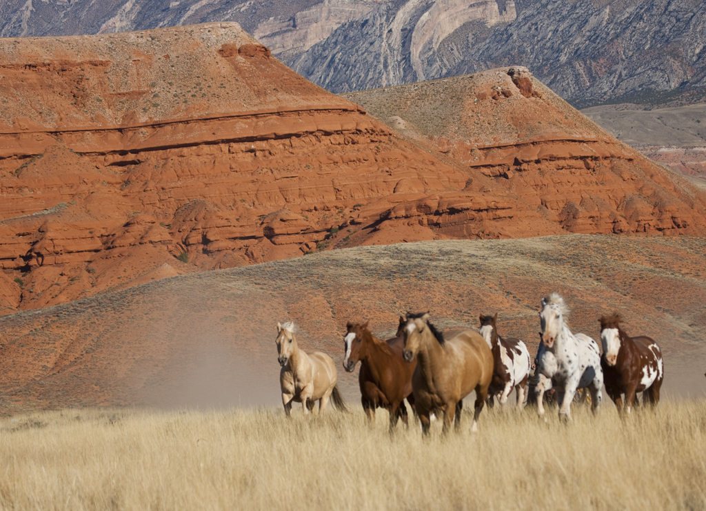 mountain ranch black girls personals Saturday, september 8 breakfast at leisure horn & cantle restaurant 7:00 - 10:00 am guided ranch activities (choices of fly fishing, hiking, mountain biking, horseback riding, yoga.