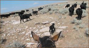 ranch-urlaub1