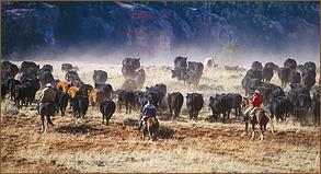 cattle-work1